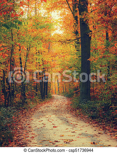 Bosque brillante de otoño - csp51736944