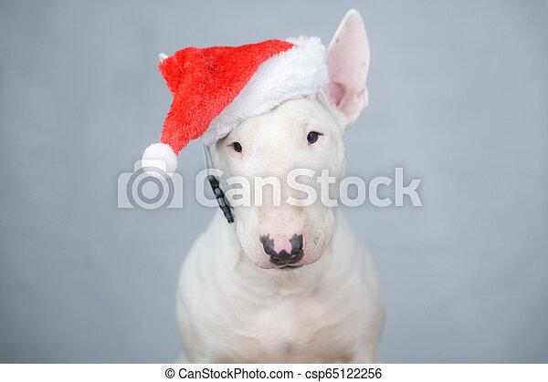 Bull terrier dog con sombrero de Santa en Navidad - csp65122256