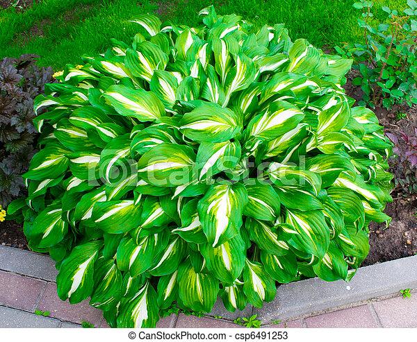 Bush verde - csp6491253