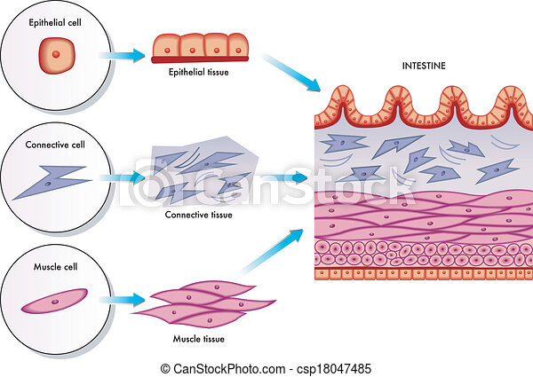 Células de pared intestinales - csp18047485
