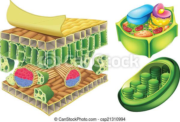 Células de plantas - csp21310994