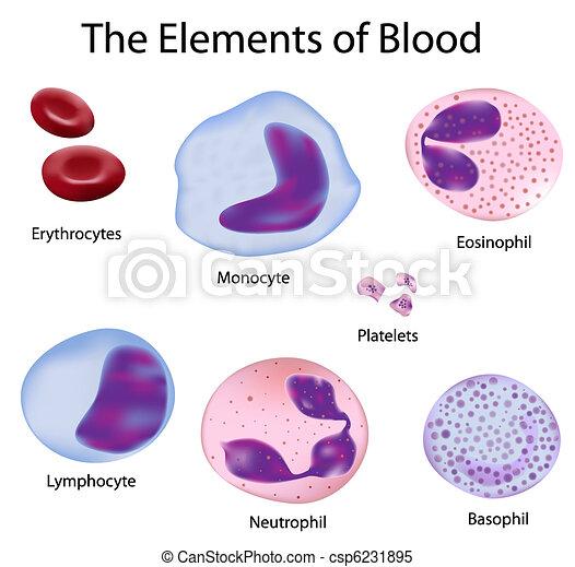 Las células de sangre - csp6231895