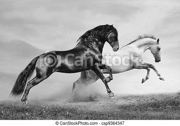 Los caballos corren - csp9364347
