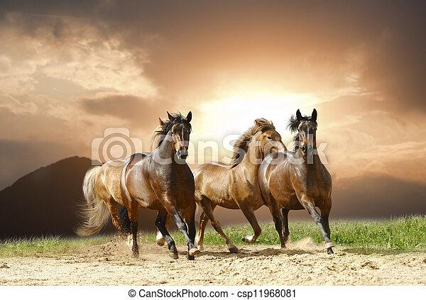 Los caballos corren - csp11968081