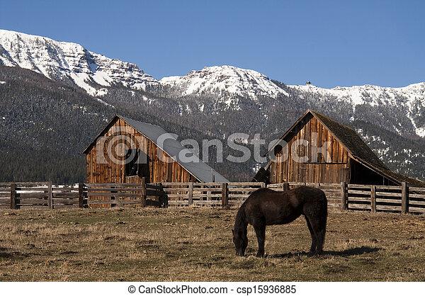 Caballos de ganado pastando madera natural en el granero de invierno - csp15936885