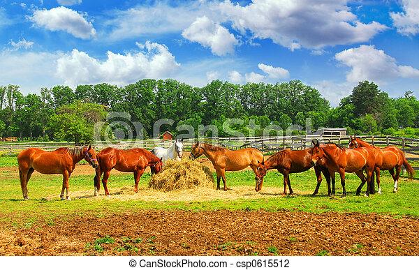 Caballos en el rancho - csp0615512