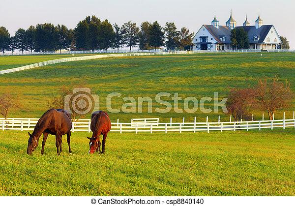 Caballos en la granja - csp8840140