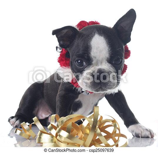 Cachorro de Navidad - csp25097639