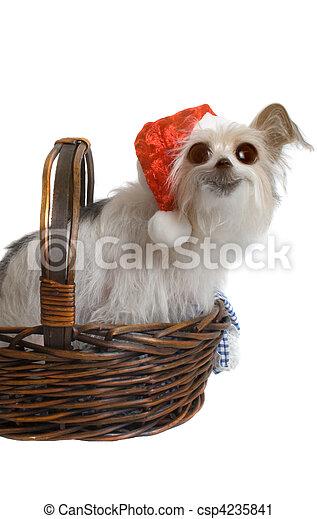 Pup de Navidad - csp4235841