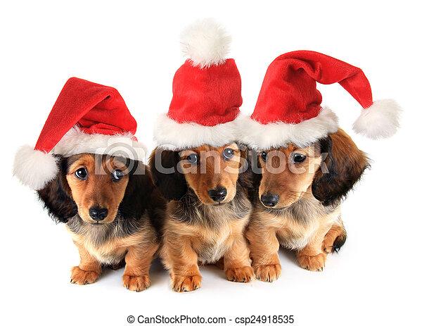 Cachorros de Navidad - csp24918535