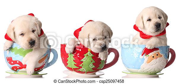 Cachorros de Navidad - csp25097458