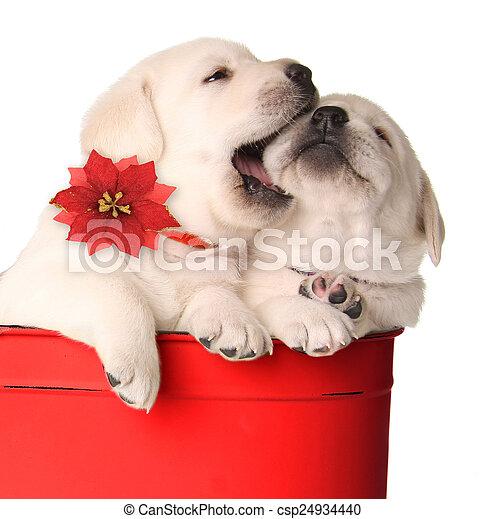 Cachorros de Navidad - csp24934440