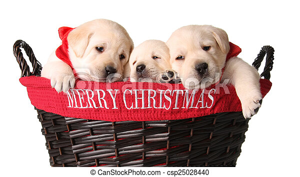 Cachorros de Navidad - csp25028440