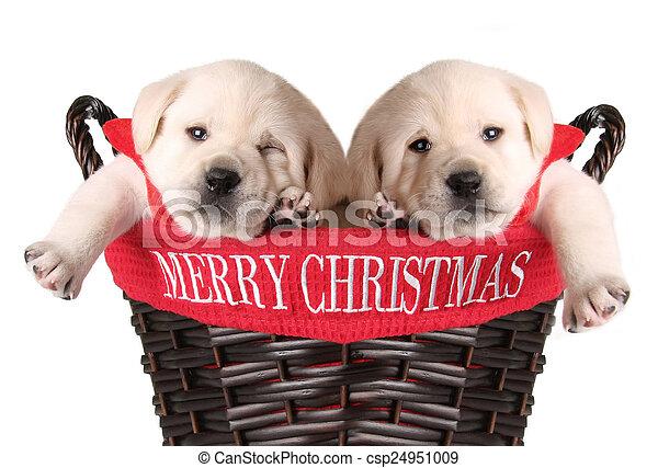 Cachorros de Navidad graciosos - csp24951009