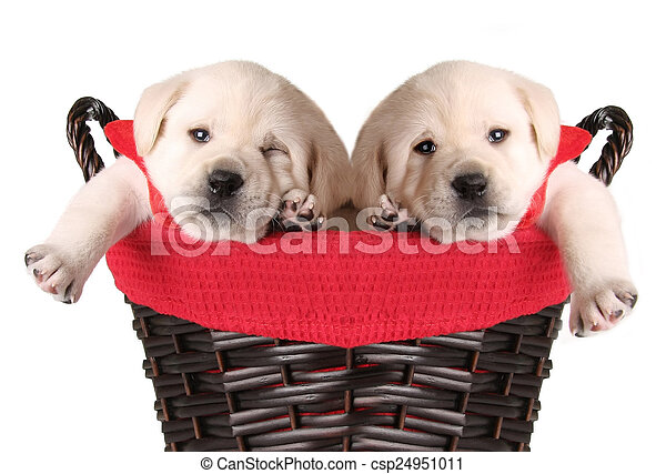Cachorros de Navidad graciosos - csp24951011