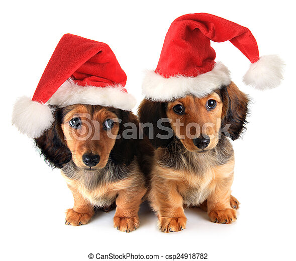 Cachorros de Navidad - csp24918782