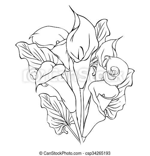 Flores de lirio de Calla - csp34265193