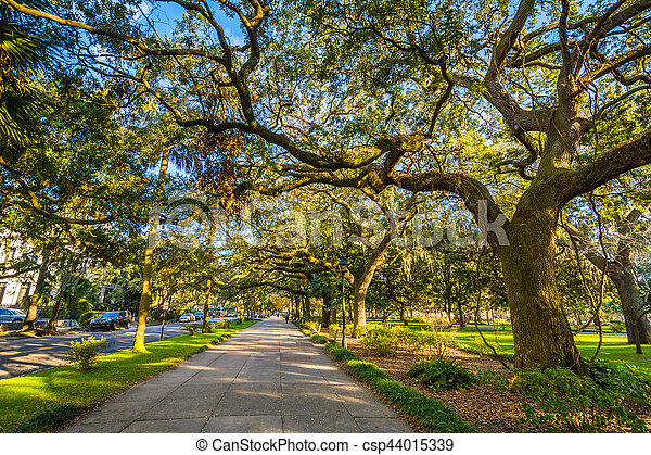 Caminos y árboles con musgo español, en el parque forsyth, en Savannah, Georgia. - csp44015339