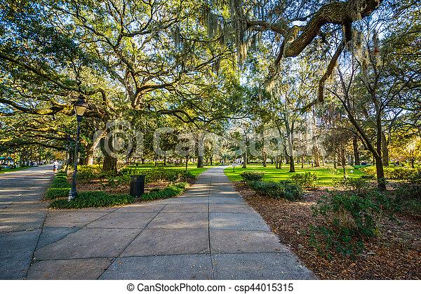 Caminos y árboles con musgo español, en el parque forsyth, en Savannah, Georgia. - csp44015315