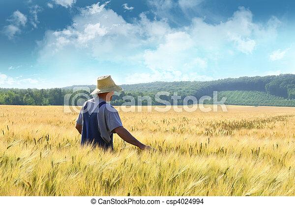 Granjero caminando por un campo de trigo - csp4024994