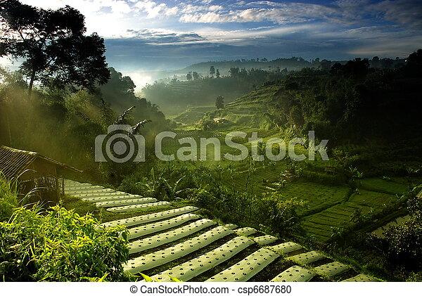 Campo de agricultura - csp6687680