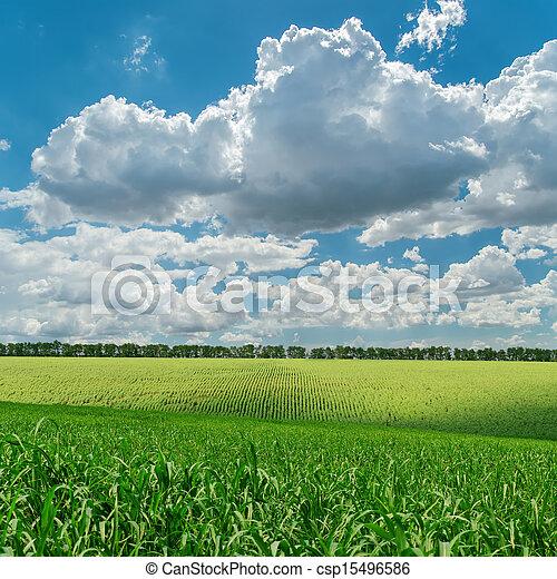 Campo de agricultura verde bajo el cielo nublado - csp15496586