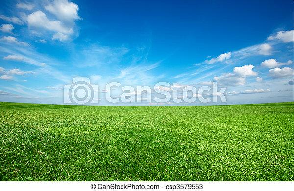 Campo de verde hierba fresca bajo el cielo azul - csp3579553