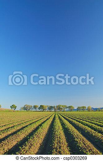 Campo rural - csp0303269