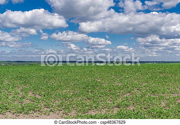 Campo de soja en verano - csp48367629