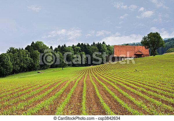 Campos agrícolas - csp3842634