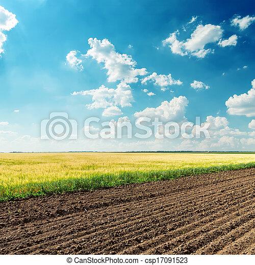 Campos de agricultura bajo el cielo azul oscuro - csp17091523