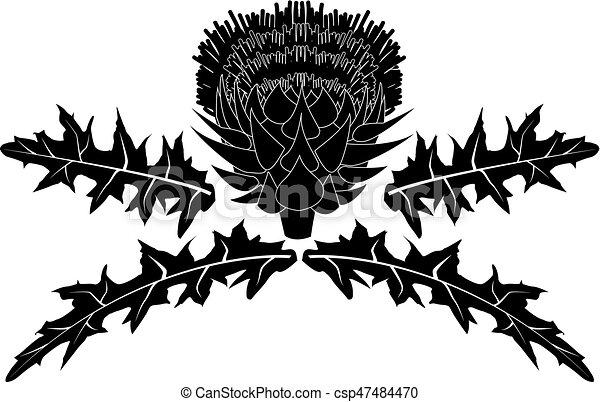 Cardo con hojas - csp47484470