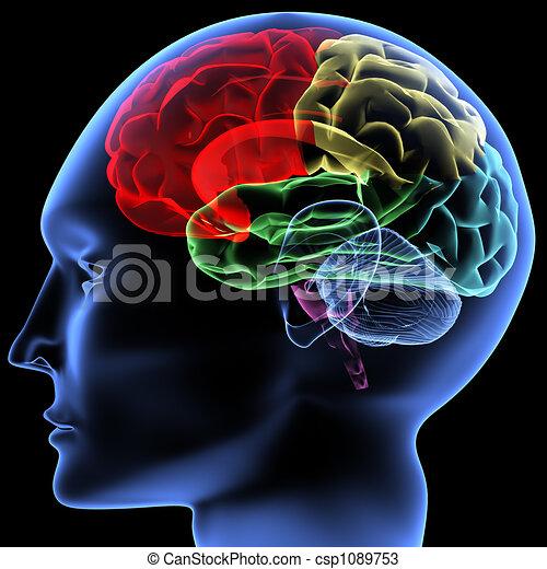 Cerebro - csp1089753