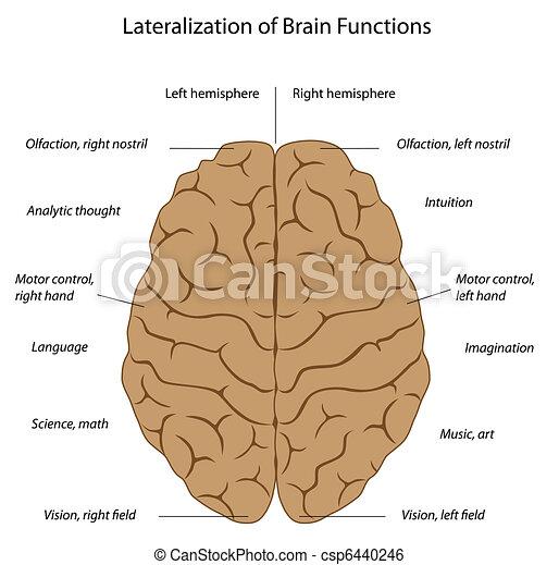 Funciones cerebrales, eps8 - csp6440246