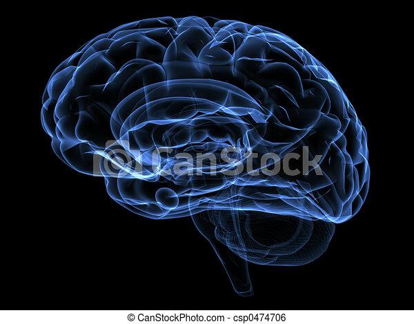 Cerebro - csp0474706