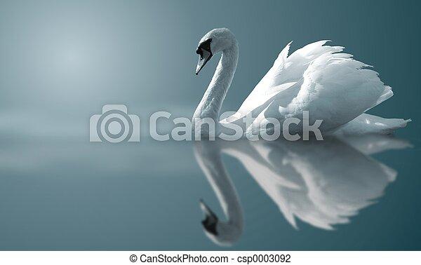 Reflejos de cisne - csp0003092
