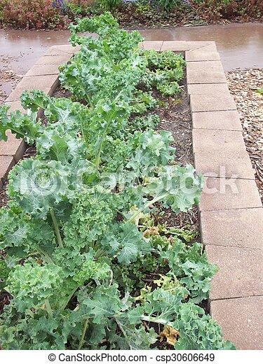 Kale - csp30606649