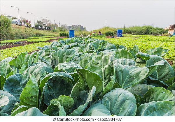 Kale - csp25384787