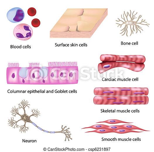 Colección de células humanas - csp6231897