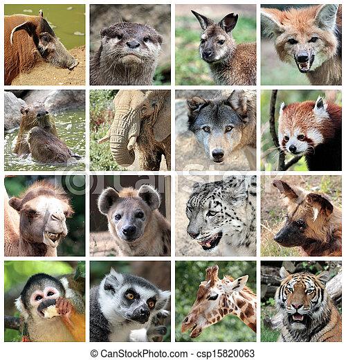 Mamíferos animales collage - csp15820063