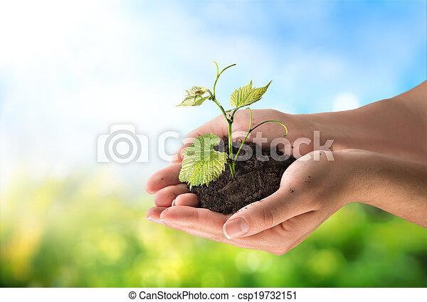 Concepto de agricultura, pequeña planta - csp19732151