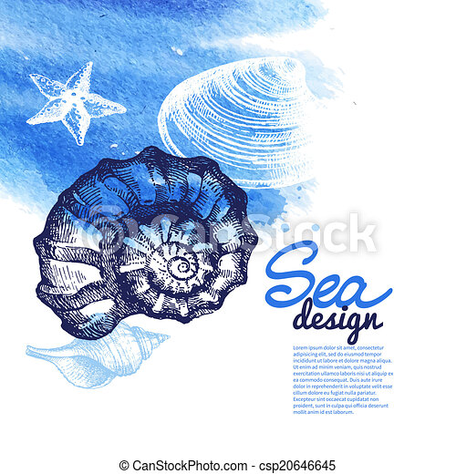 Conchas marinas - csp20646645