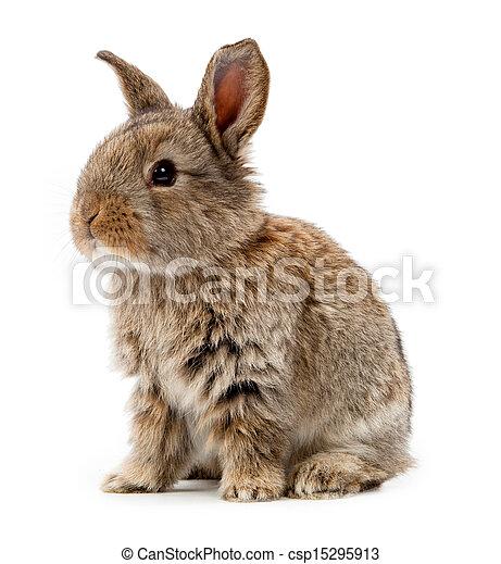 Animales. Conejo aislado en un fondo blanco - csp15295913