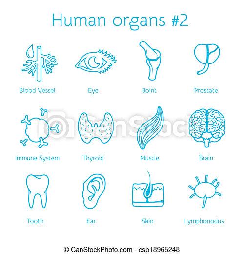 Vector conjunto de iconos contornos humanos - csp18965248