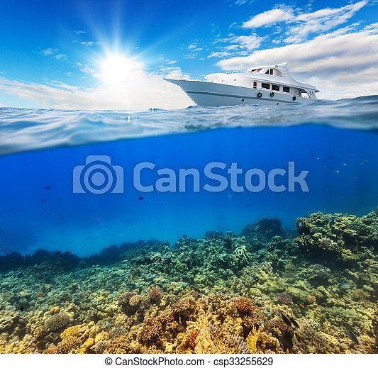 Coral bajo el agua con horizonte y superficie de agua - csp33255629
