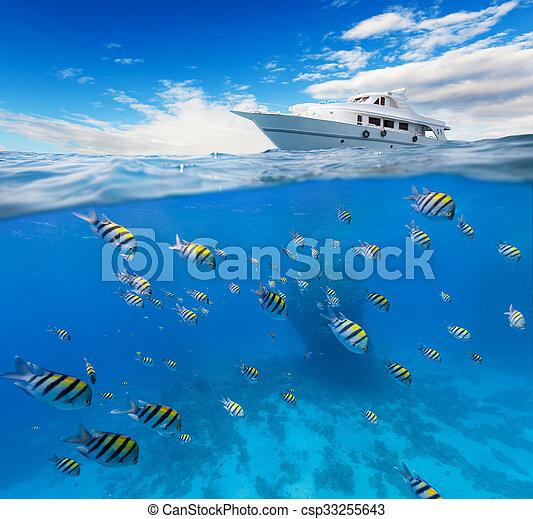 Coral bajo el agua con horizonte y superficie de agua - csp33255643