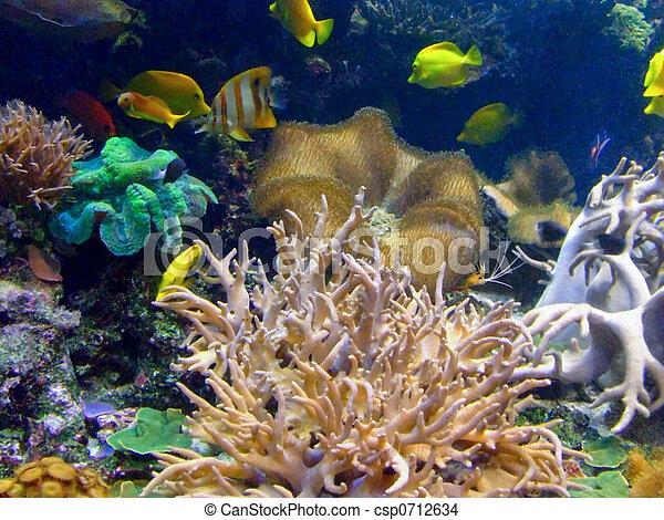 Vida coral - csp0712634