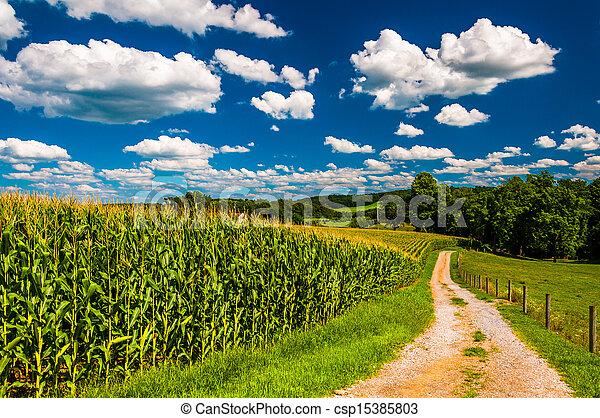 Cornfield y entrada a una granja en el condado rural del sur de York, Pennsylvania. - csp15385803
