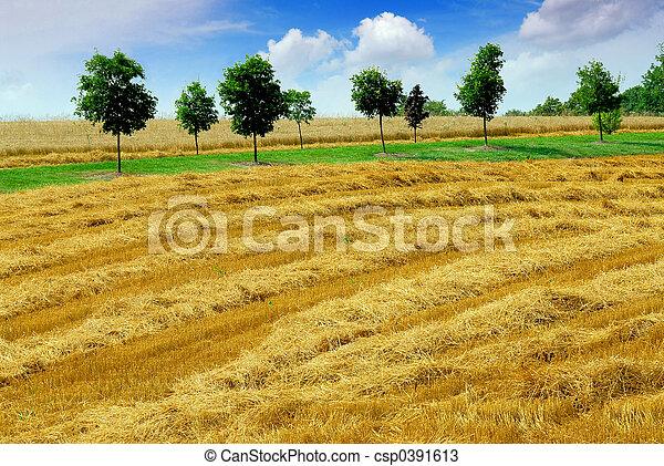 Campo de cosecha - csp0391613