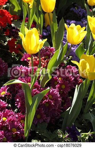 Los tulipanes son adultos y exquisitos. Parks - csp18076029
